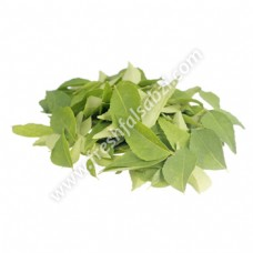 Curry Leaves - Curry Patte