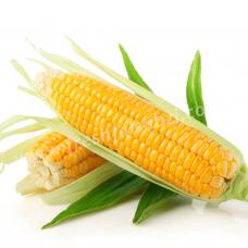 Corn - Bhutta