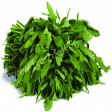 Chenopodium - Bathua Leaves